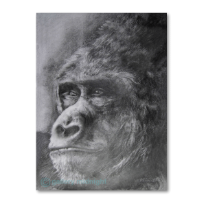 Black and white pencil drawing of Gorilla's face close up
